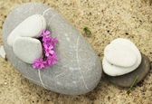 Stones and flowers — Stock Photo