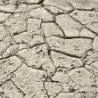 Stock Photo: Gray soil