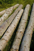Wood on grass — Stock Photo