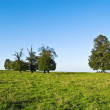 Five trees — Stock Photo #10529293