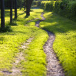 Stock Photo: Sunlit and ethereal path