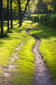 Sunlit and ethereal path — Stock Photo