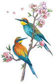 Bee eater birds — Stock Photo
