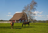 Pair of Horses Grazing — Stock Photo