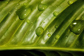 Drops on a green leaf — Stock Photo