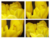 Macro photos of yellow tulips — Stock Photo