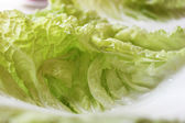 Macro cabbage leaves — Stock Photo