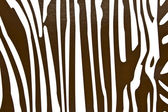 Seamless background with zebra skin pattern — Stock Photo
