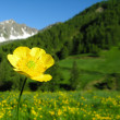 Flowery meadow — Stockfoto