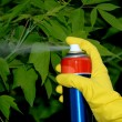 Pesticiding the garden - Stock Photo