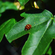Red ladybird sits on green sheet of a plant — Stock Photo #10320053