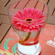 Gerbera — Stock Photo #10320123