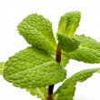 Stock Photo: Peppermint