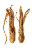 Angelica sinensis — Stock Photo