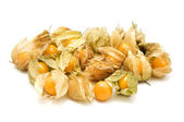 Physalis — Stock Photo