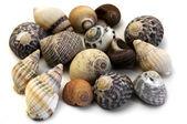 Conchas do mar — Foto Stock
