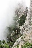 Top of a mountain in the fog — Stockfoto