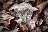 Alfombra de bosque — Foto de Stock