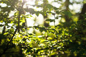 Young leaves — Stock Photo