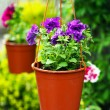 Blooms in garden — Stock Photo #10491364