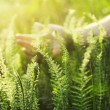 Hand touching green grass — Stock Photo #10540409
