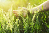 Hand touching green grass — Stock Photo