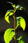 Small plant — Stock Photo