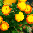 Bouquet of yellow flowers — Stock Photo #10550285
