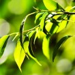 Background With Leaves and brokeh effect — Stock Photo