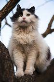 Cat in tree — Stockfoto
