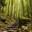 Stair in the wood — Stock Photo