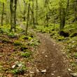 Path in the wood — Stock Photo