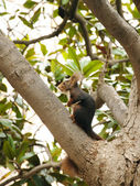 Red Squirrel on a tree — Stock Photo