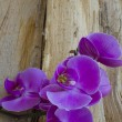 Purple Orchid on wood — 图库照片