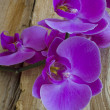Purple Orchid on Wood — Stock Photo