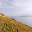 Lookout over the swiss wineyards - Stock Photo