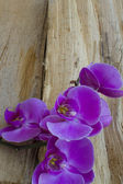 Purple Orchid on wood — Stock fotografie