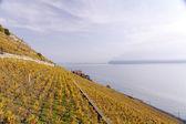 Mirador sobre los viñedos de suiza — Foto de Stock