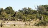 Wildlife panorama — Stock Photo