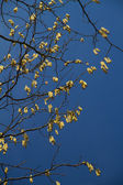Many hanging seeds — Stock Photo