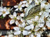 黄蝴蝶在花上 — 图库照片