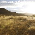 ������, ������: Dusk in savanna