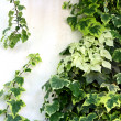 Stock Photo: Overgrown wall