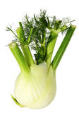 Fenchel — Stockfoto