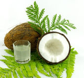 Coconut on a white background — Stock Photo