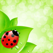Ladybug On Leaf — Stock Vector