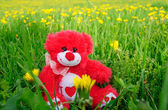 Red teddy on on greenfield — Stock Photo