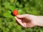 Sunny strawberry — Stock Photo