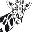 Sketch of giraffe head. Vector illustration - Stock Vector