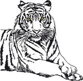Sketch of white tiger. Vector illustration — Stock Vector